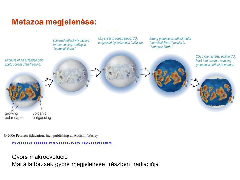 """Ordo: Tricladida – hármasbelű örvényférgek Platyhelminthes""""Turbellaria 2."""
