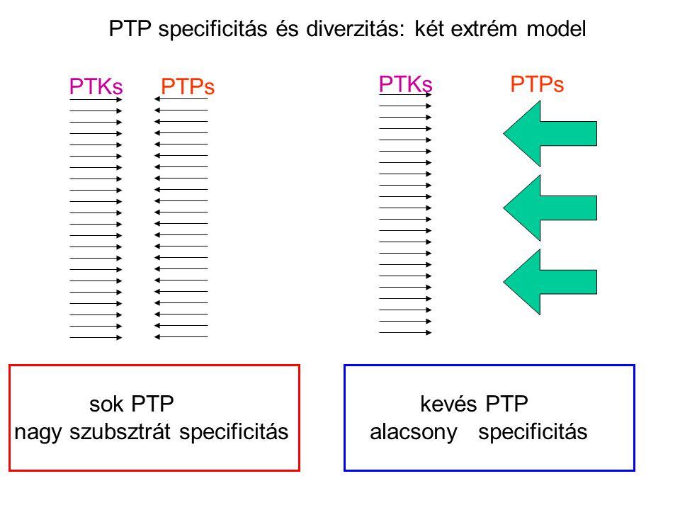 PTP specificitás és diverzitás: két extrém model PTKsPTPs PTKsPTPs sok PTP nagy szubsztrát specificitás kevés PTP alacsony specificitás