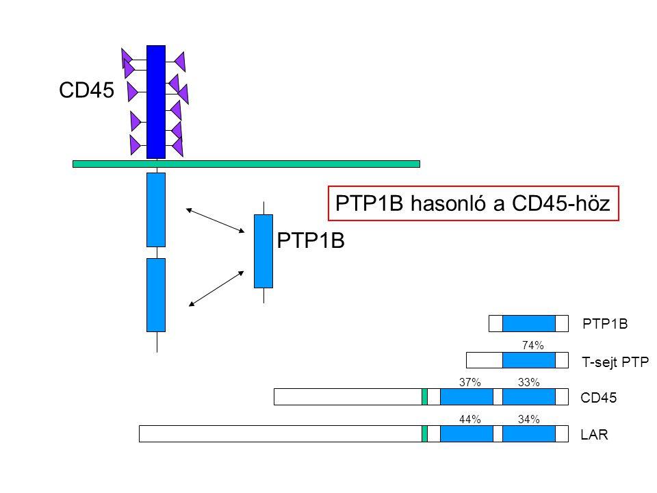 CD45 PTP1B T-sejt PTP CD45 LAR PTP1B hasonló a CD45-höz 74% 37% 33% 44% 34%