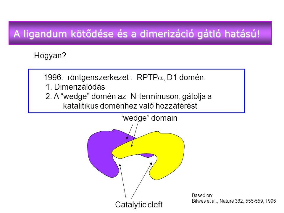 Hogyan.1996: röntgenszerkezet : RPTP , D1 domén: 1.