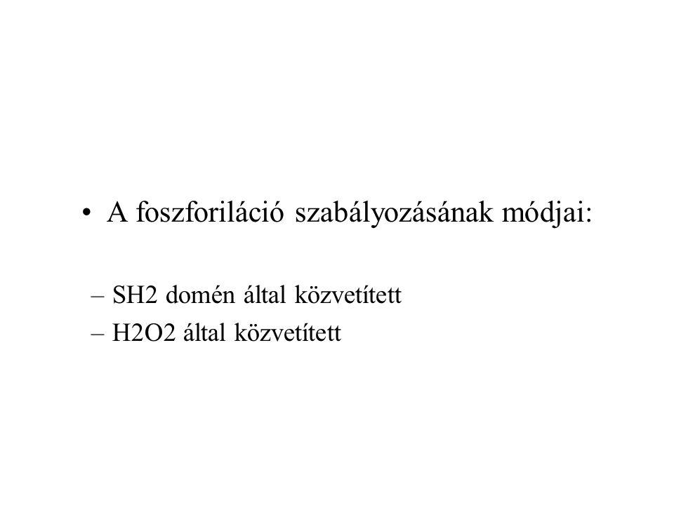 A foszforiláció szabályozásának módjai: –SH2 domén által közvetített –H2O2 által közvetített