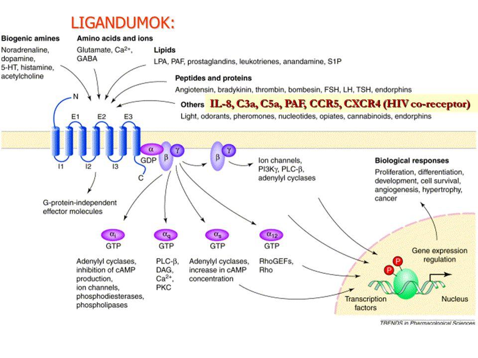 IL-8, C3a, C5a, PAF, CCR5, CXCR4 (HIV co-receptor) LIGANDUMOK: