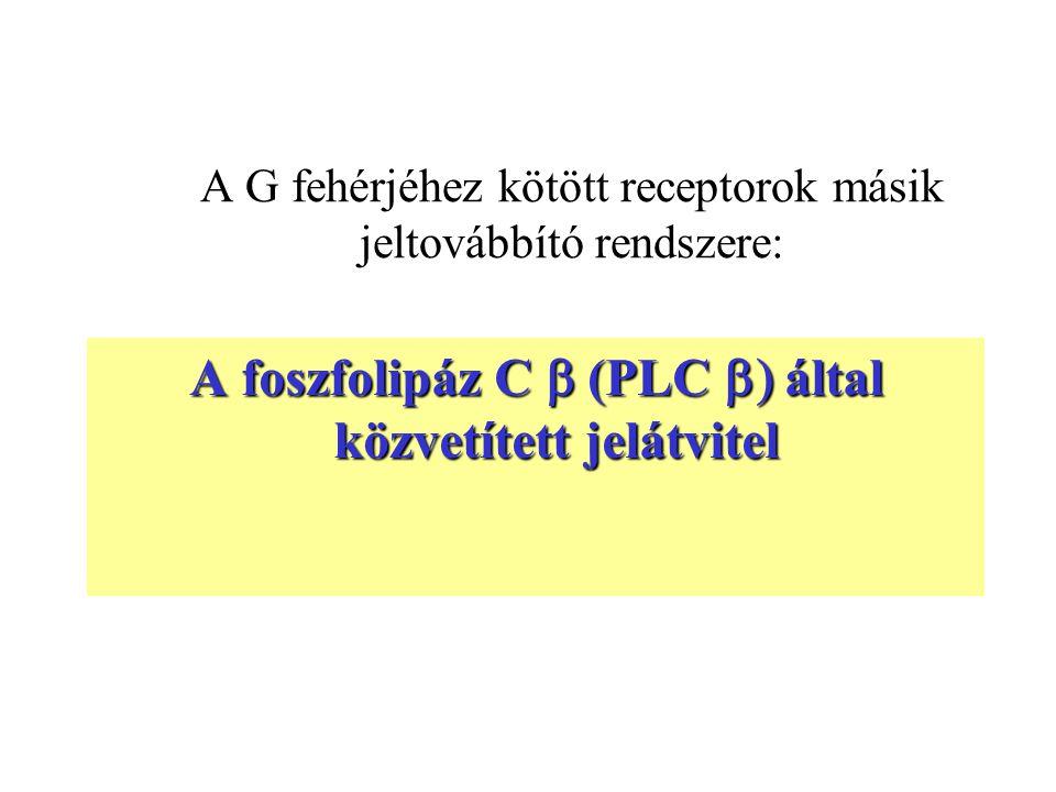 A G fehérjéhez kötött receptorok másik jeltovábbító rendszere: A foszfolipáz C  (PLC  által közvetített jelátvitel