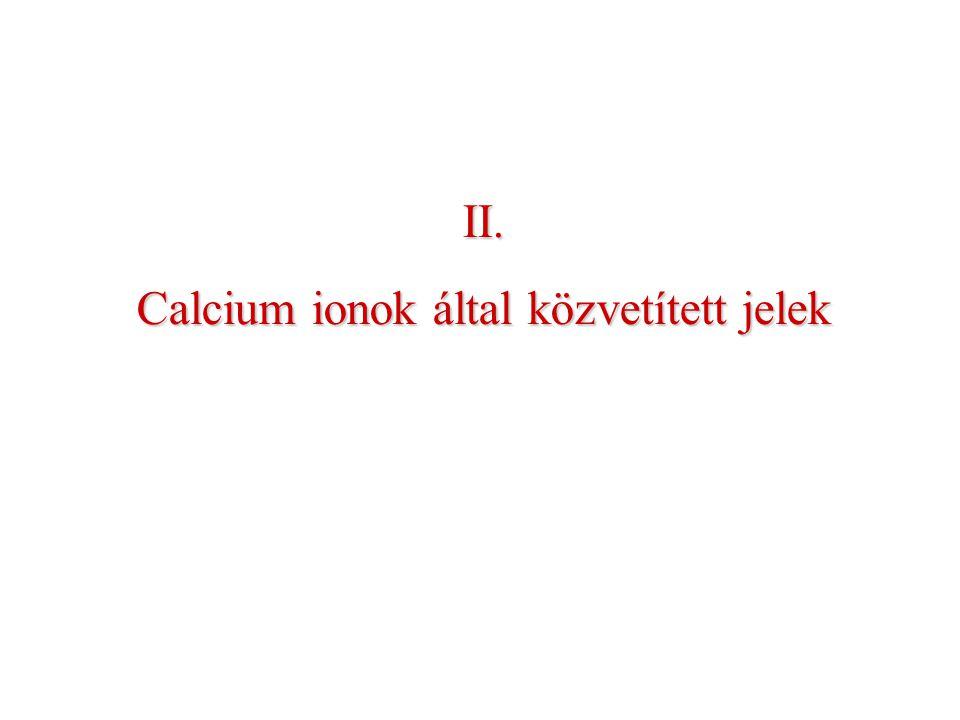 II. Calcium ionok által közvetített jelek