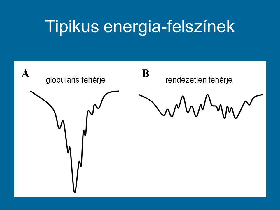 Kötőhelyek jóslása Ott várunk kötőhelyet, ahol: – A környezet rendezetlen (S átlag magas) – A saját környezetével vett energia kedvezőtlen (E saját nagy) – Energetikailag jobb globuláris fehérjével kölcsönhatni (E nyereség nagy)