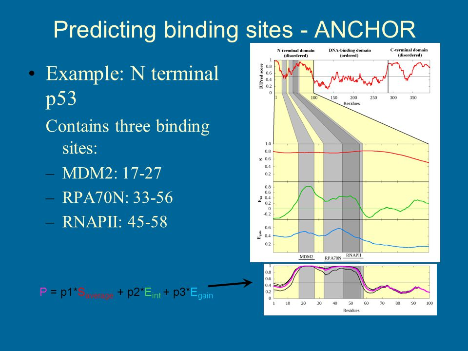 Predicting binding sites - ANCHOR Example: N terminal p53 Contains three binding sites: –MDM2: 17-27 –RPA70N: 33-56 –RNAPII: 45-58 P = p1*S average + p2*E int + p3*E gain