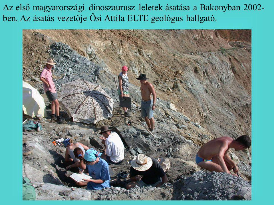 Az első magyarországi dinoszaurusz leletek ásatása a Bakonyban 2002- ben. Az ásatás vezetője Ősi Attila ELTE geológus hallgató.
