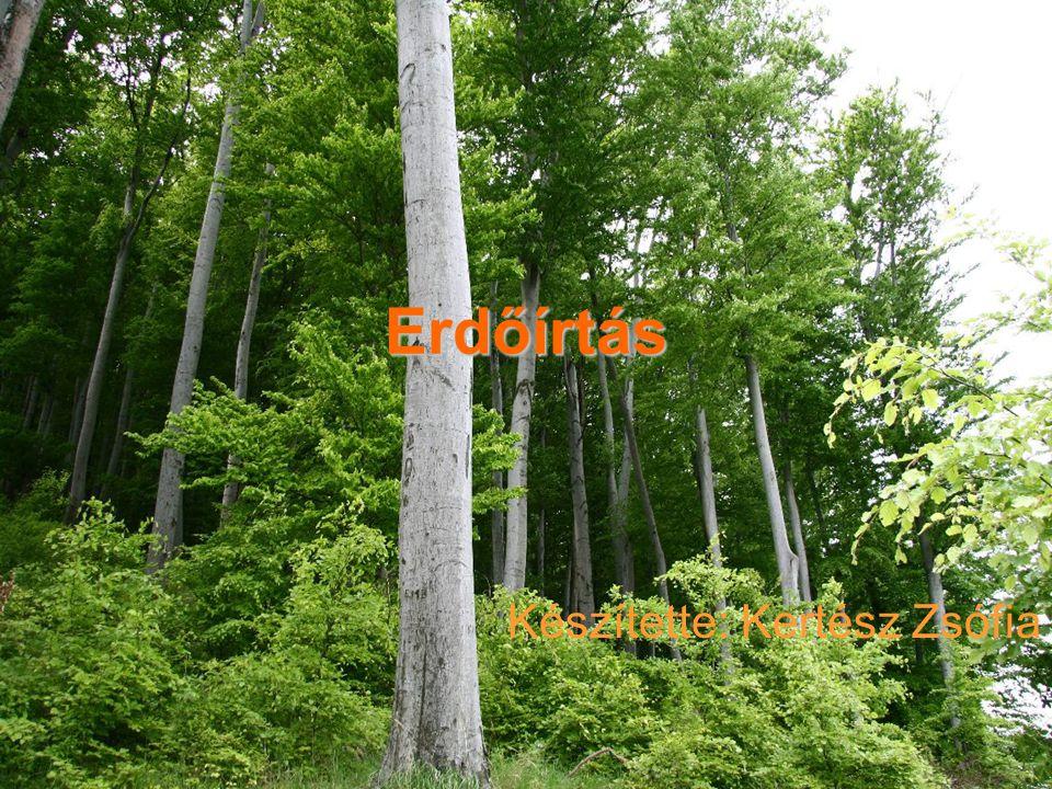Erdőírtás Készítette: Kertész Zsófia