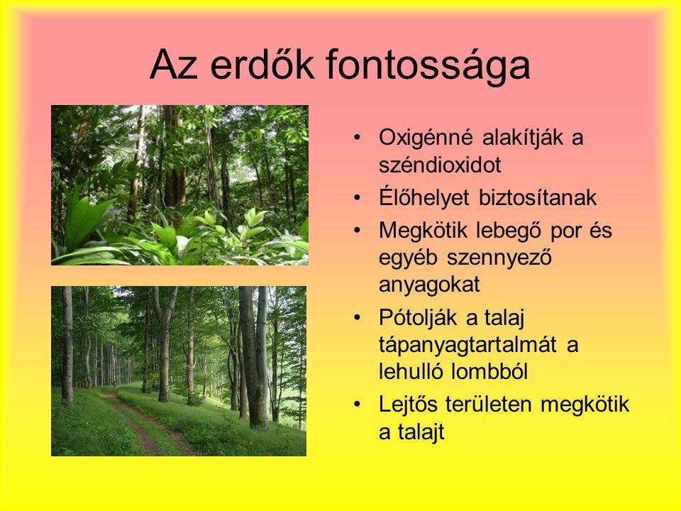 Az erdők fontossága Oxigénné alakítják a széndioxidot Élőhelyet biztosítanak Megkötik lebegő por és egyéb szennyező anyagokat Pótolják a talaj tápanyagtartalmát a lehulló lombból Lejtős területen megkötik a talajt