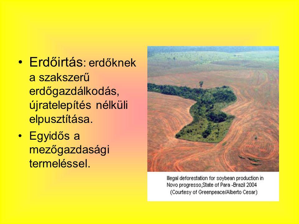 A civilizáció kialakulásakor a szf.-k felét erdő borította Ma: ez 20% Mérsékelt övi erdők területe 35 %- kal csökkent; irtásuk korábban megkezdődött; ma már törvény védi őket Esőerdők területük 25%-t vesztették el; 20.