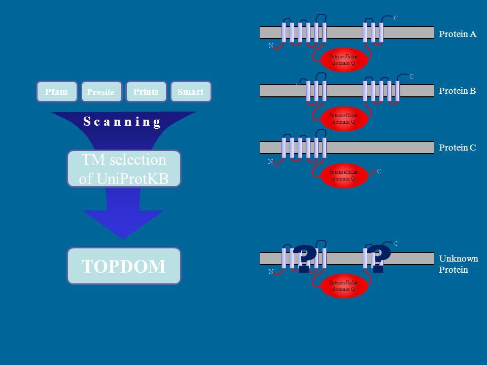 Pfam Prosite PrintsSmart S c a n n i n g TM selection of UniProtKB TOPDOM Protein A Protein B Protein C Unknown Protein Intracellular domain Q N C N C N C N C .