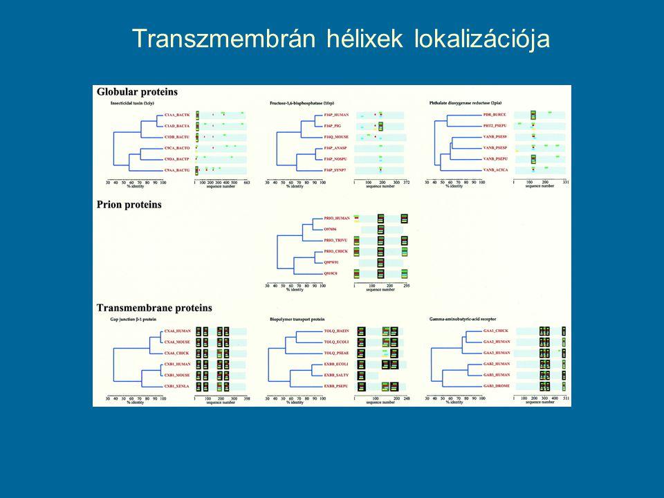 Transzmembrán hélixek lokalizációja