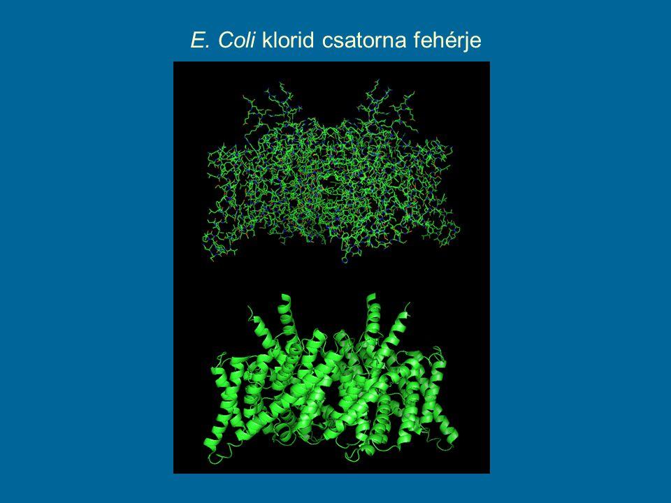 E. Coli klorid csatorna fehérje