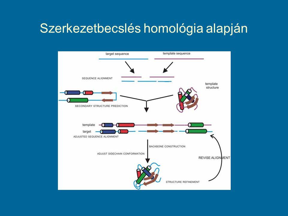 Az emberi rodopszin és a bakteriorodopszin aminosav- sorrendjeinek összehasonlítása