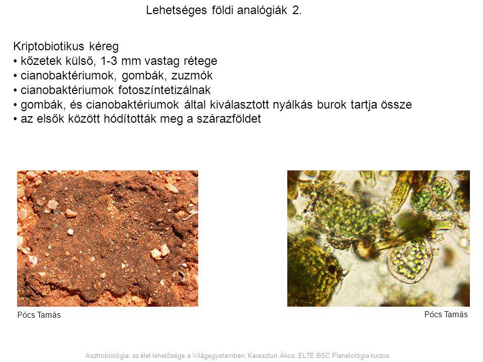 Kriptobiotikus kéreg kőzetek külső, 1-3 mm vastag rétege cianobaktériumok, gombák, zuzmók cianobaktériumok fotoszíntetizálnak gombák, és cianobaktériu