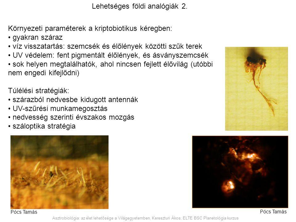 Környezeti paraméterek a kriptobiotikus kéregben: gyakran száraz víz visszatartás: szemcsék és élőlények közötti szűk terek UV védelem: fent pigmentál