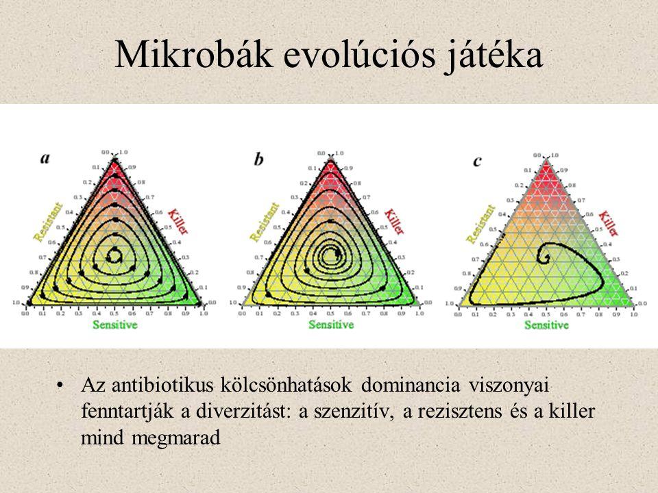 Mikrobák evolúciós játéka Az antibiotikus kölcsönhatások dominancia viszonyai fenntartják a diverzitást: a szenzitív, a rezisztens és a killer mind me