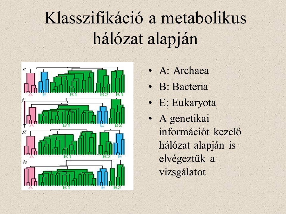 Klasszifikáció a metabolikus hálózat alapján A: Archaea B: Bacteria E: Eukaryota A genetikai információt kezelő hálózat alapján is elvégeztük a vizsgá