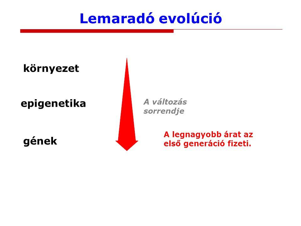 Lemaradó evolúció környezet gének A változás sorrendje epigenetika A legnagyobb árat az első generáció fizeti.