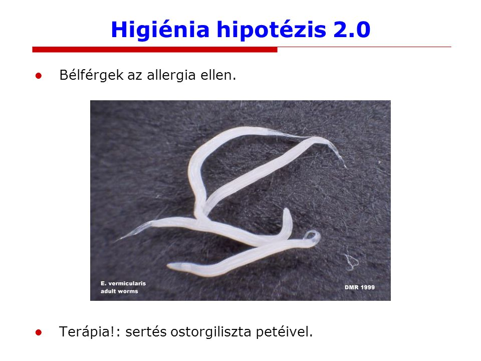 Higiénia hipotézis 2.0 Bélférgek az allergia ellen. Terápia!: sertés ostorgiliszta petéivel.