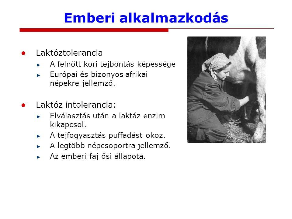 Emberi alkalmazkodás Laktóztolerancia A felnőtt kori tejbontás képessége Európai és bizonyos afrikai népekre jellemző. Laktóz intolerancia: Elválasztá
