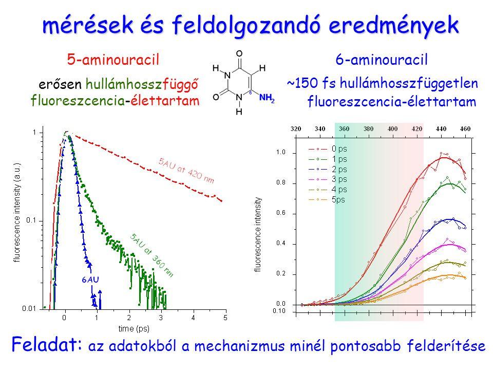 mérések és feldolgozandó eredmények 6-aminouracil erősen hullámhosszfüggő fluoreszcencia-élettartam ~150 fs hullámhosszfüggetlen fluoreszcencia-élettartam 5-aminouracil Feladat: az adatokból a mechanizmus minél pontosabb felderítése