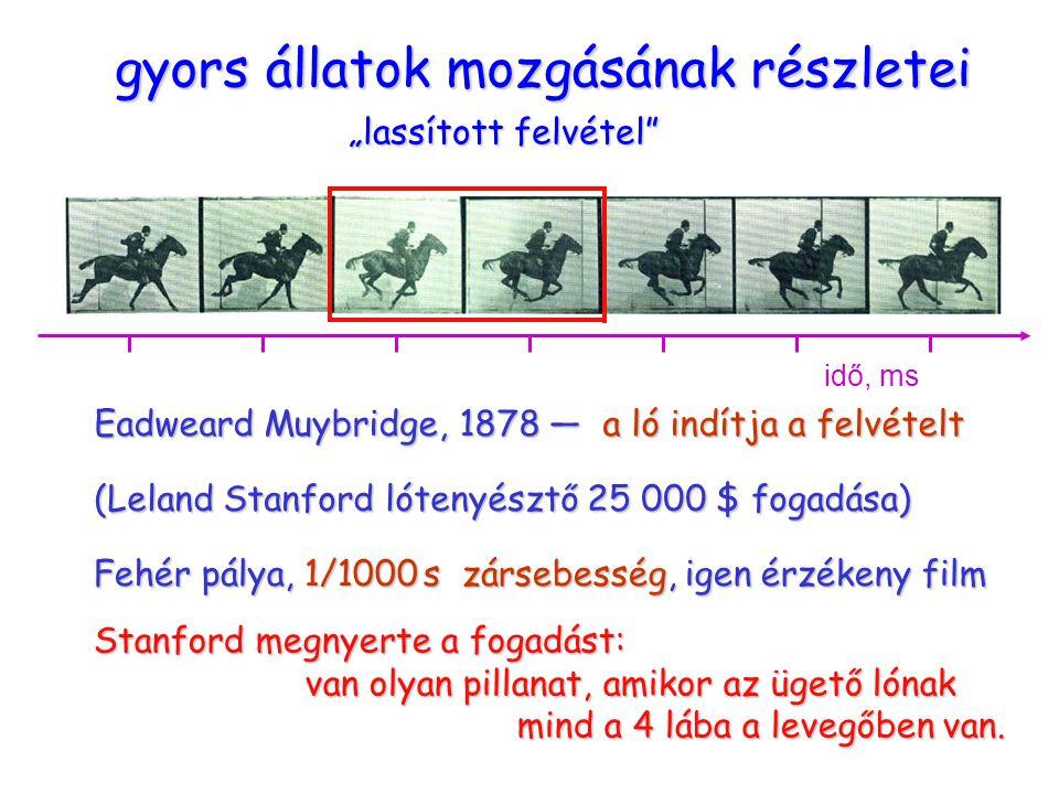 """ügető ló gyors állatok mozgásának részletei """"lassított felvétel Eadweard Muybridge, 1878 — a ló indítja a felvételt (Leland Stanford lótenyésztő 25 000 $ fogadása) Fehér pálya, 1/1000 s zársebesség, igen érzékeny film idő, ms Stanford megnyerte a fogadást: van olyan pillanat, amikor az ügető lónak mind a 4 lába a levegőben van."""