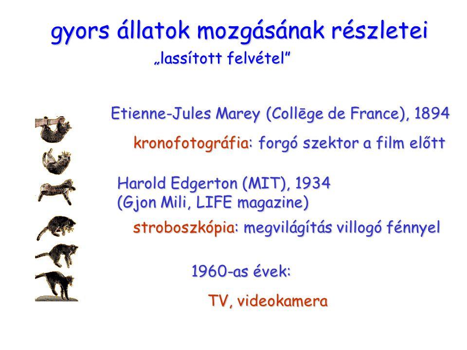 """macska """"lassított felvétel Etienne-Jules Marey (Collēge de France), 1894 kronofotográfia: forgó szektor a film előtt Harold Edgerton (MIT), 1934 (Gjon Mili, LIFE magazine) stroboszkópia: megvilágítás villogó fénnyel 1960-as évek: TV, videokamera gyors állatok mozgásának részletei"""