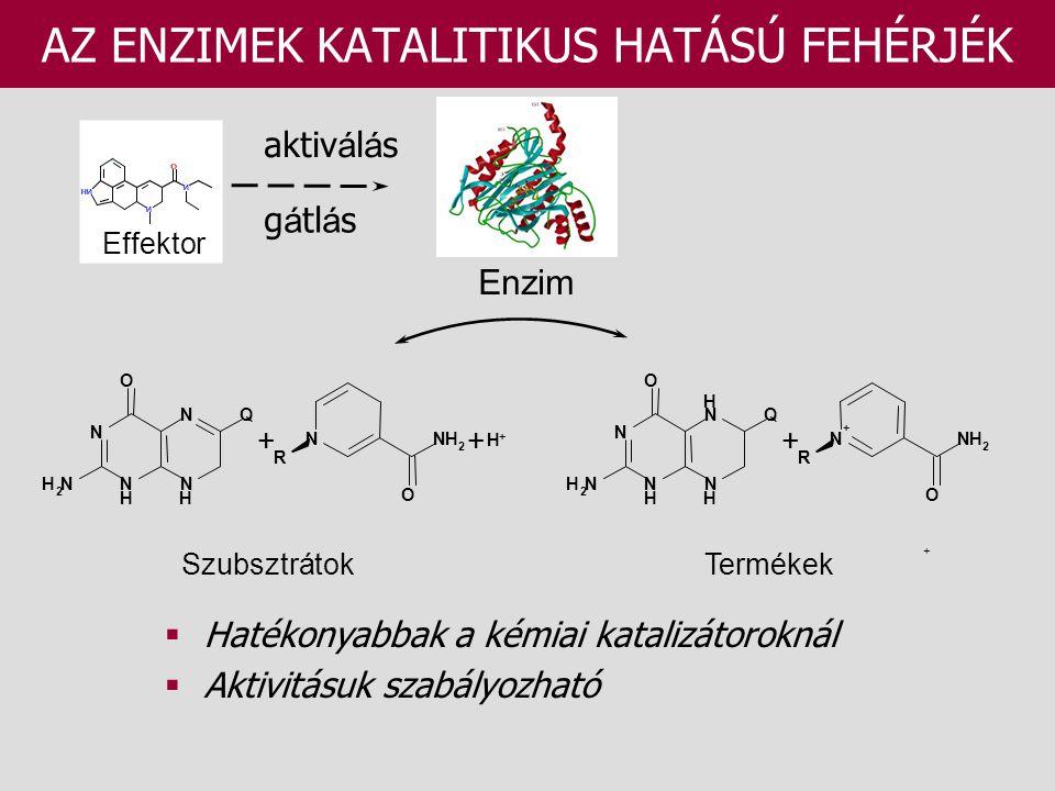 AZ ENZIMEK KATALITIKUS HATÁSÚ FEHÉRJÉK SzubsztrátokTermékek  Hatékonyabbak a kémiai katalizátoroknál  Aktivitásuk szabályozható Enzim N H N N N H Q O NH 2 + R NNH 2 O + H + N H N H N N H Q O NH 2 + R N + NH 2 O + Effektor aktiv á l á s g á tl á s