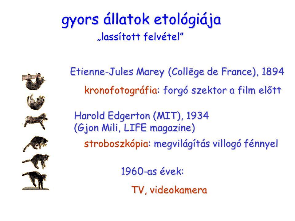 """macska gyors állatok etológiája """"lassított felvétel"""" Etienne-Jules Marey (Collēge de France), 1894 kronofotográfia: forgó szektor a film előtt Harold"""