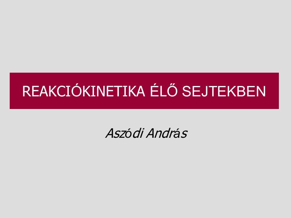 REAKCI Ó KINETIKA É L Ő SEJTEKBEN Asz ó di Andr á s