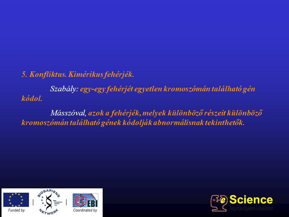 5. Konfliktus. Kimérikus fehérjék. Szabály: egy-egy fehérjét egyetlen kromoszómán található gén kódol. Másszóval, azok a fehérjék, melyek különböző ré