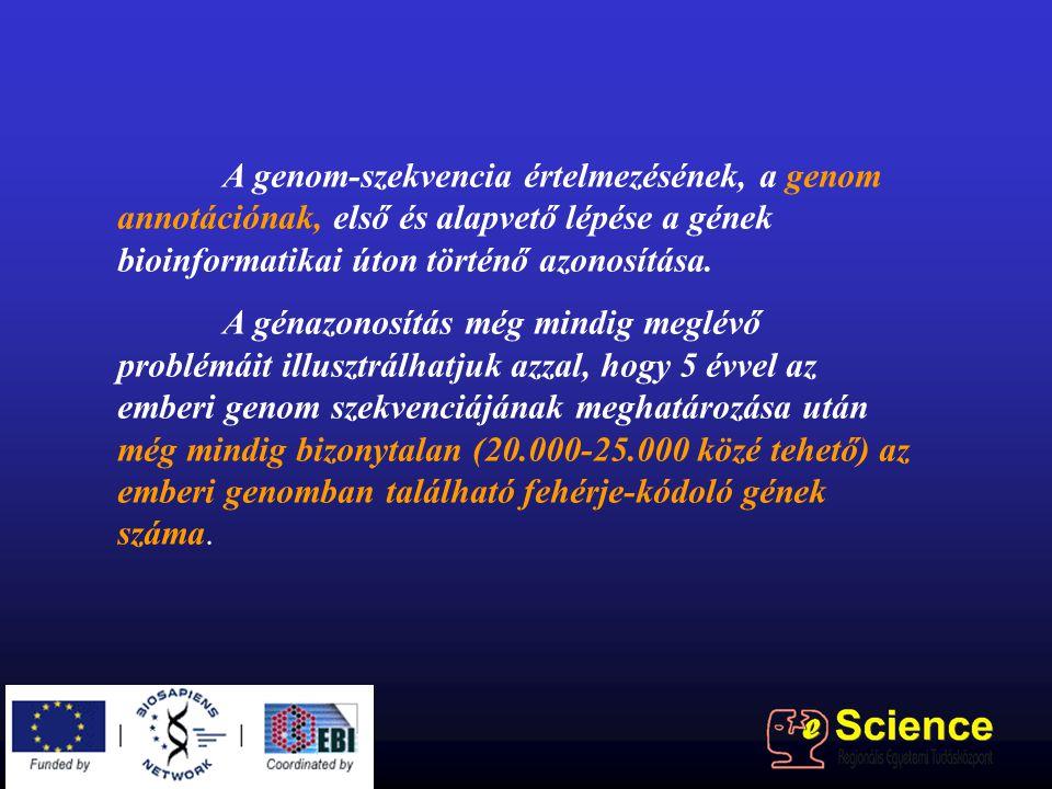 A genom-szekvencia értelmezésének, a genom annotációnak, első és alapvető lépése a gének bioinformatikai úton történő azonosítása. A génazonosítás még
