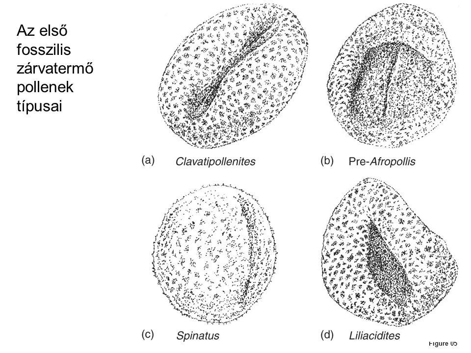 Figure 05 Az első fosszilis zárvatermő pollenek típusai