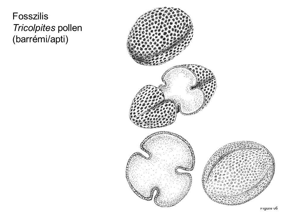 Figure 14 Fosszilis rovarcsaládok időbeli elterjedése és a zárvatermők megjelenése