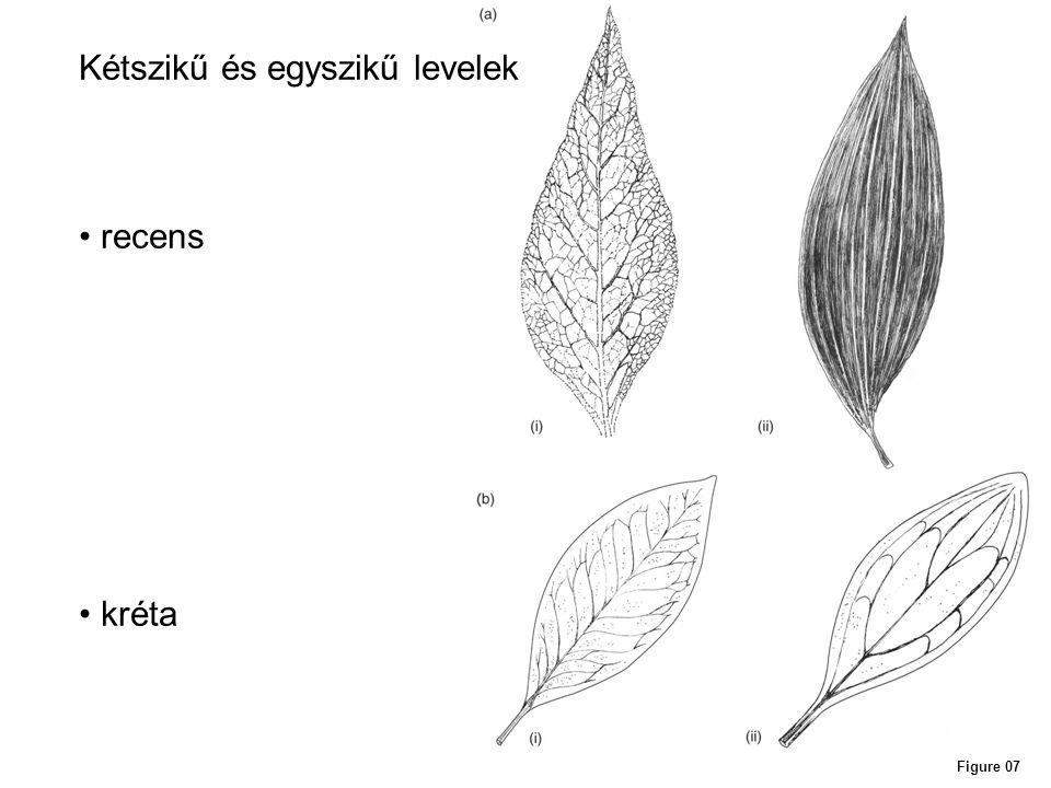 Figure 08 Kréta zárvatermők ökológiai szerepe levélalak alapján Késői szukcesszió Korai szukcesszió Vízparti környezet, ill.