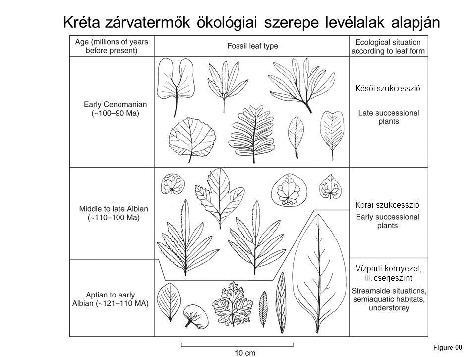 Figure 08 Kréta zárvatermők ökológiai szerepe levélalak alapján Késői szukcesszió Korai szukcesszió Vízparti környezet, ill. cserjeszint
