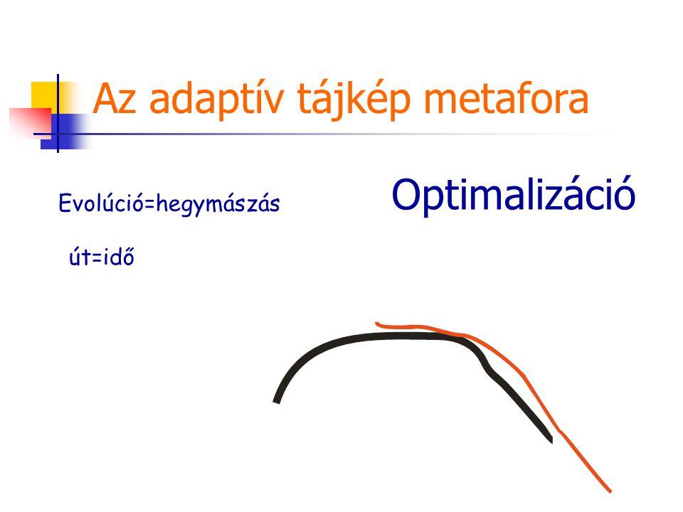Az adaptív tájkép metafora Evolúció=hegymászás út=idő Optimalizáció