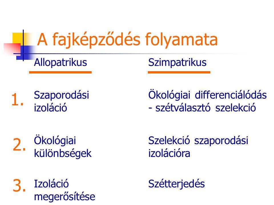 A fajképződés folyamata AllopatrikusSzimpatrikus Szaporodási izoláció Ökológiai differenciálódás - szétválasztó szelekció Ökológiai különbségek Izoláció megerősítése Szelekció szaporodási izolációra Szétterjedés 1.