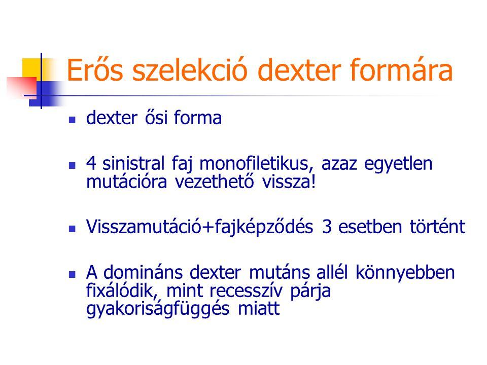 Erős szelekció dexter formára dexter ősi forma 4 sinistral faj monofiletikus, azaz egyetlen mutációra vezethető vissza! Visszamutáció+fajképződés 3 es