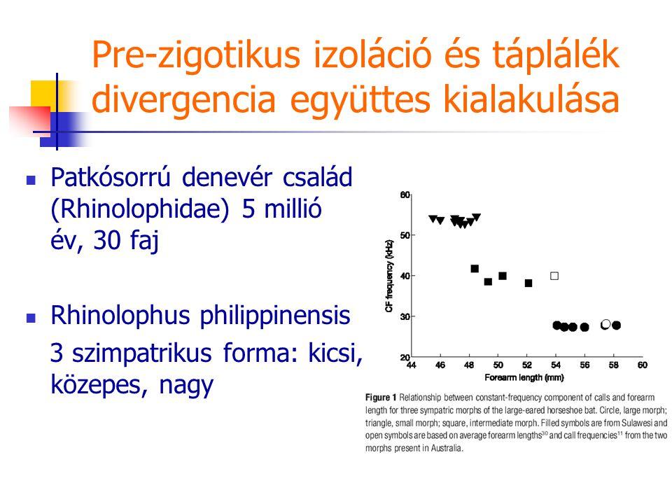 Pre-zigotikus izoláció és táplálék divergencia együttes kialakulása Patkósorrú denevér család (Rhinolophidae) 5 millió év, 30 faj Rhinolophus philippinensis 3 szimpatrikus forma: kicsi, közepes, nagy