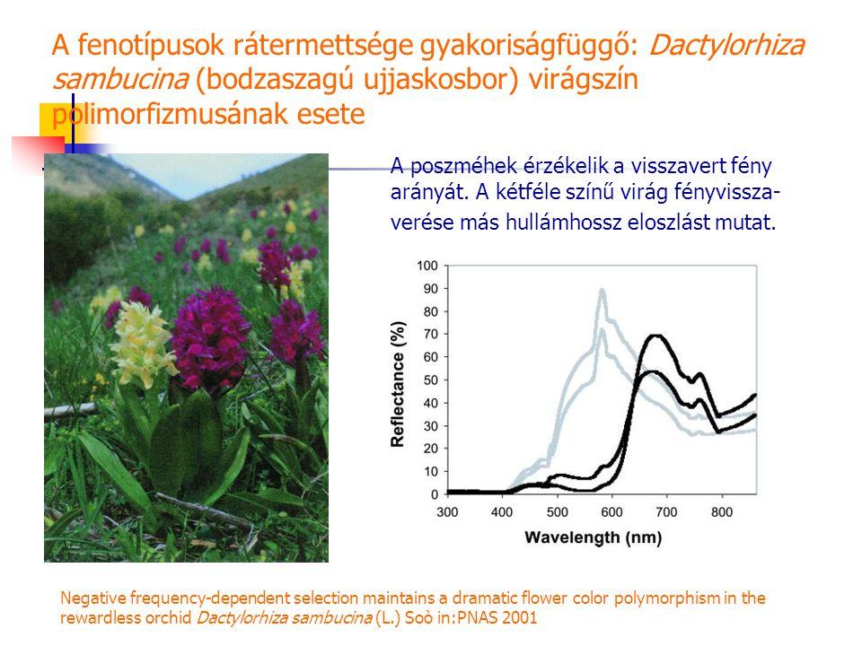A fenotípusok rátermettsége gyakoriságfüggő: Dactylorhiza sambucina (bodzaszagú ujjaskosbor) virágszín polimorfizmusának esete A poszméhek érzékelik a visszavert fény arányát.
