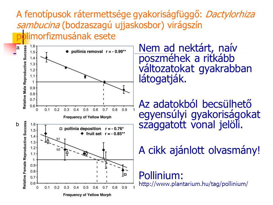 A fenotípusok rátermettsége gyakoriságfüggő: Dactylorhiza sambucina (bodzaszagú ujjaskosbor) virágszín polimorfizmusának esete Nem ad nektárt, naív poszméhek a ritkább változatokat gyakrabban látogatják.