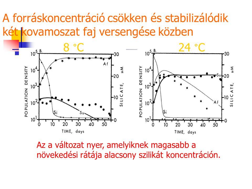 A forráskoncentráció csökken és stabilizálódik két kovamoszat faj versengése közben 8 °C24 °C Az a változat nyer, amelyiknek magasabb a növekedési rátája alacsony szilikát koncentráción.