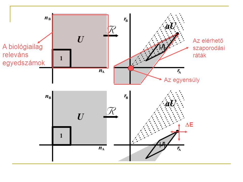 A biológiailag releváns egyedszámok Az egyensúly Az elérhető szaporodási ráták EE