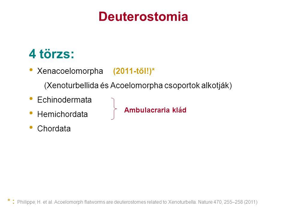 Philippe, H. et al. Acoelomorph flatworms are deuterostomes related to Xenoturbella. Nature 470, 255–258 (2011) Deuterostomia 4 törzs: Xenacoelomorpha