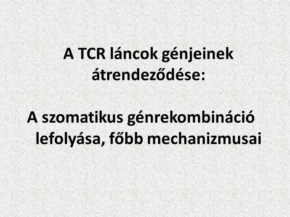 A TCR láncok génjeinek átrendeződése: A szomatikus génrekombináció lefolyása, főbb mechanizmusai