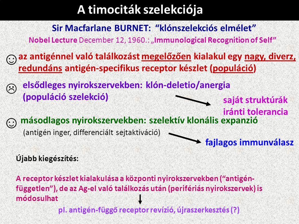 """A timociták szelekciója Sir Macfarlane BURNET: """"klónszelekciós elmélet"""" ☺ az antigénnel való találkozást megelőzően kialakul egy nagy, diverz, redundá"""
