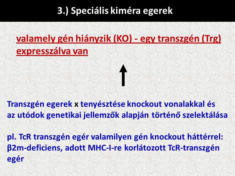 3.) Speciális kiméra egerek valamely gén hiányzik (KO) - egy transzgén (Trg) expresszálva van Transzgén egerek x tenyésztése knockout vonalakkal és az