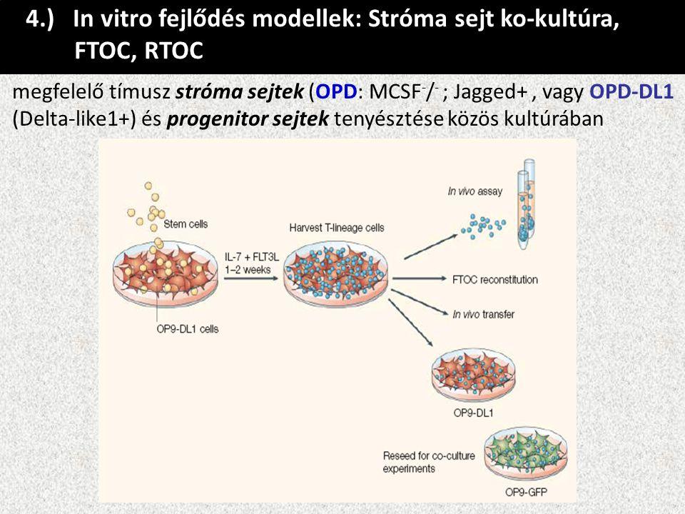 4.) In vitro fejlődés modellek: Stróma sejt ko-kultúra, FTOC, RTOC megfelelő tímusz stróma sejtek (OPD: MCSF - / - ; Jagged+, vagy OPD-DL1 (Delta-like